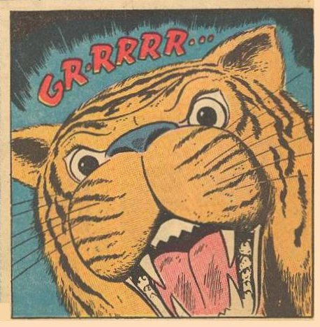 A tiger looks angry.